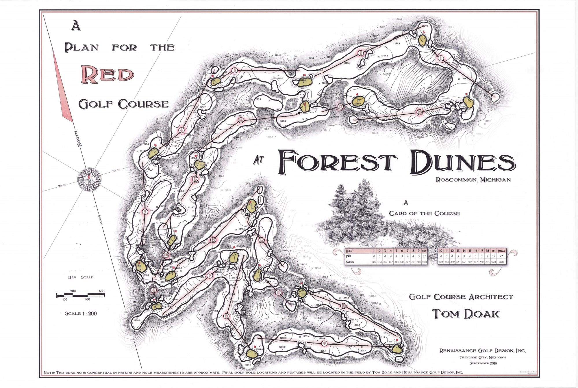 Forest Dunes