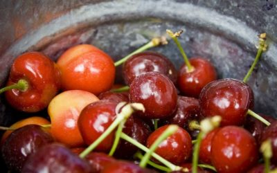 Red Hot Best 2016 Northern Michigan Cherry Products