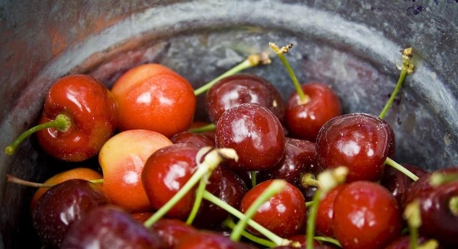 northern michigan cherry products