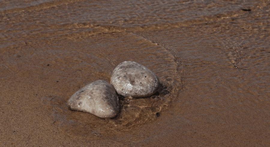 polish petoskey stones