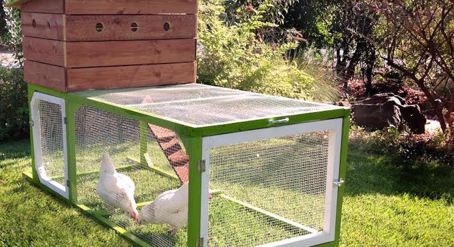 Rent-a-Chicken