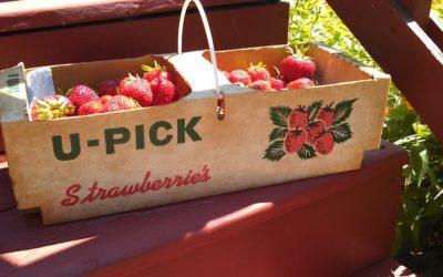 Kid-Friendly Northern Michigan Strawberries Recipe