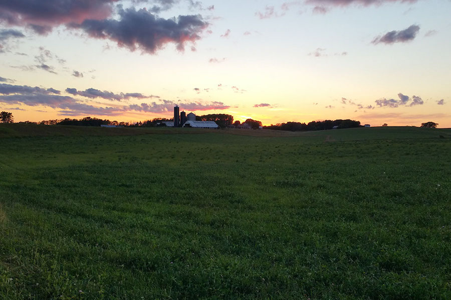 Rudbeckia Farm