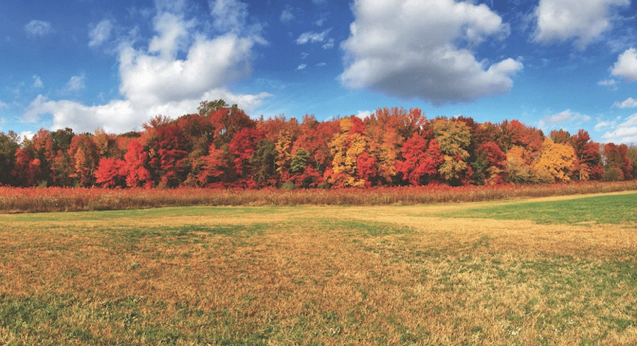 5 Places to Catch the Northern Michigan Fall Color