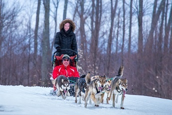 treetopsdogsledding2015winter_04732