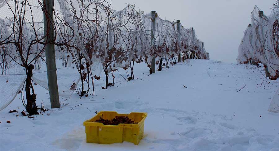 michigan ice wine