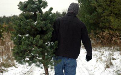 13 Northern Michigan Christmas Tree Farms