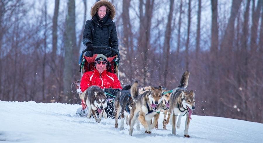 treetops resort dog sledding