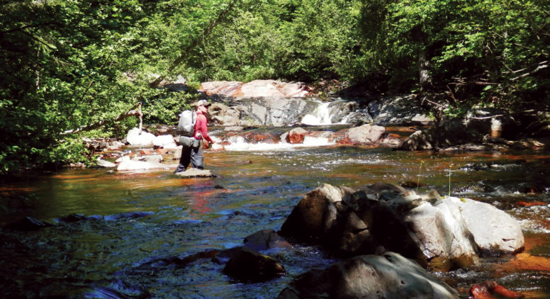 Saving Waterfalls and Forest on the Upper Peninsula's Yellow Dog River
