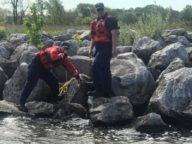 coast guard rescues deer in manistee
