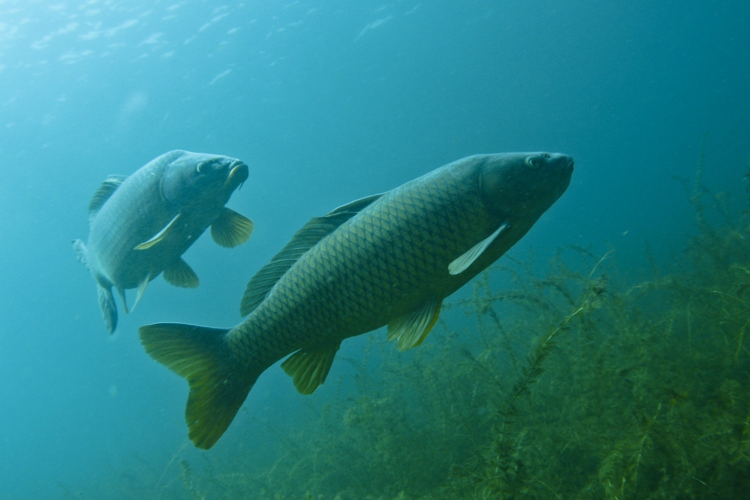 Waters of resiliency dnr researchers talk mysteries and for Fish in michigan