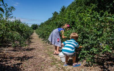 11 Best Northern Michigan U-Pick Farms with Blueberries, Strawberries, Raspberries
