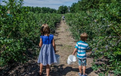 Northern Michigan U-Picks: Best Places for Local Fruit