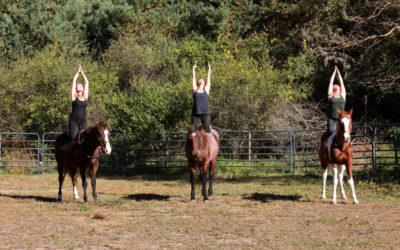 EquuSpirit Partnership Offers Workshops, Team Building Through Horses