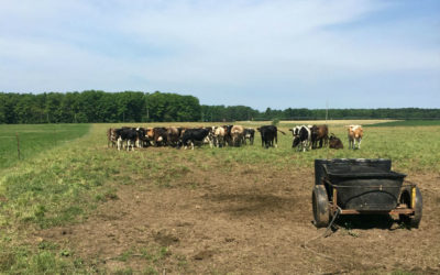 6 Northern Michigan Dairy Farms and Stores
