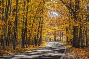 M119 Tunnel of Trees