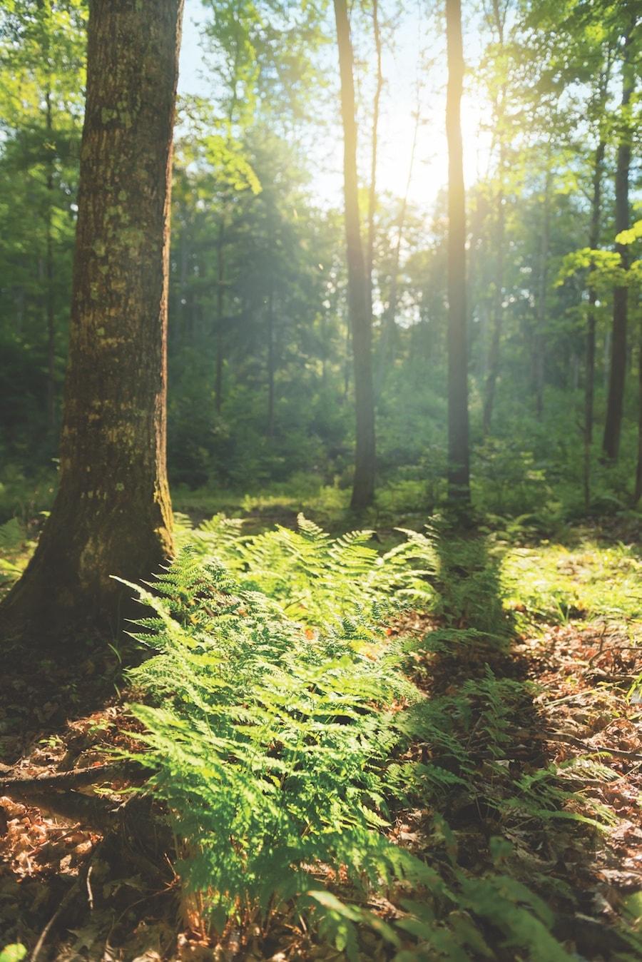 Palmer Woods Leelanau County