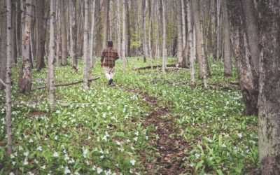 Explore the New Hoogland Family Nature Preserve Along the Tunnel of Trees