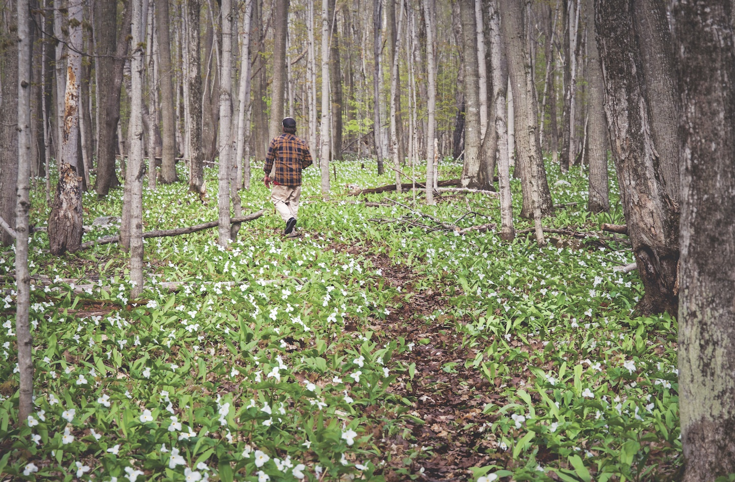 Explore the New Hoogland Family Nature Preserve Along the Tunnel of ...