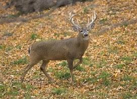 safe hunting tips