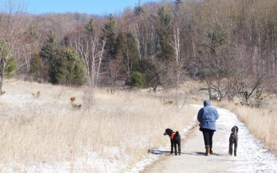 Fitness File: Winter Walking with Chris Hinze in Traverse City