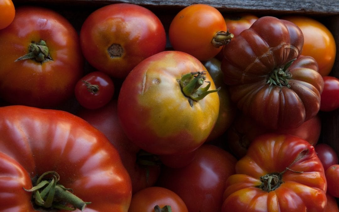 Eat for Your Health: Benefits of Tomatoes