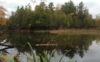 Crystal River in Glen Arbor