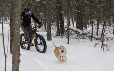 Where to Try Fat-Tire Biking in Traverse City