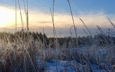 Stillness in Winter