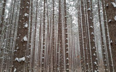 Pines in Harbor Springs