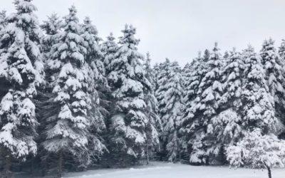Pure Michigan Winter
