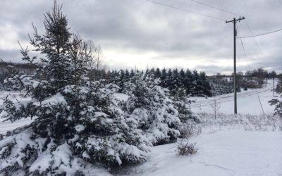Winter Roads in Michigan