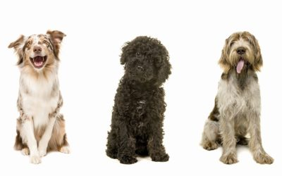 Pets Help Your Health? Yes! Cherryland Humane Society Shares the Benefits of Companion Dogs
