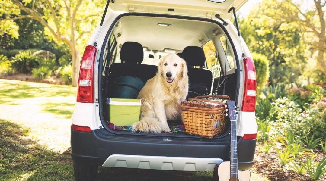 Dog-Friendly Places