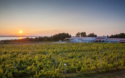 10 New Wine Releases to Sip on Old Mission Peninsula