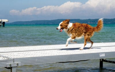 Dog-Friendly Vacation Ideas in Northern Michigan