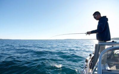 Seek Out the Big Boys (aka Cisco) in Grand Traverse Bay