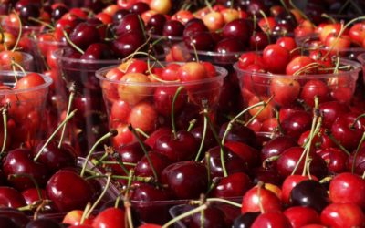 Traverse City National Cherry Festival Vacation Planner