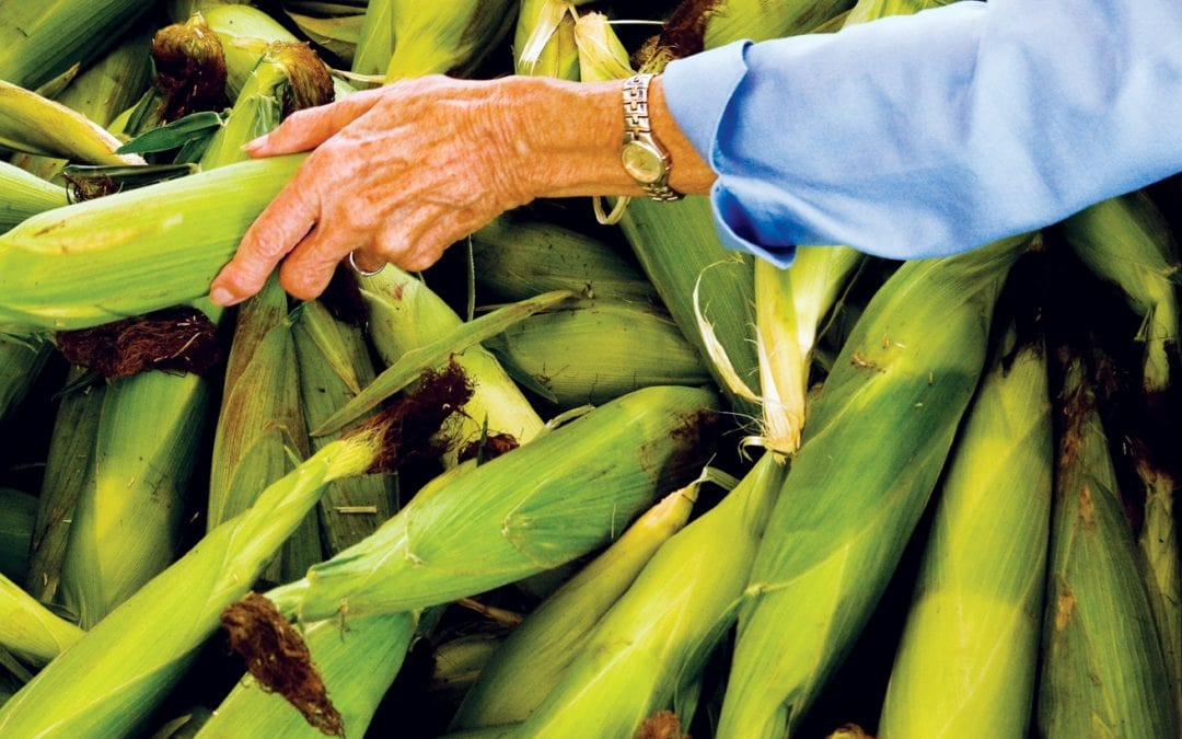 Where to Find the BestNorthern Michigan Sweet Corn this Summer!
