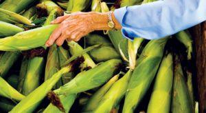 northern michigan sweet corn