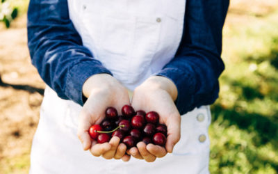 What's it Like to Be a Northern Michigan Cherry Grower?