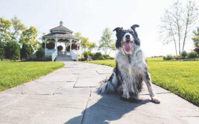 6 Dog-Friendly Mackinac Island Adventures