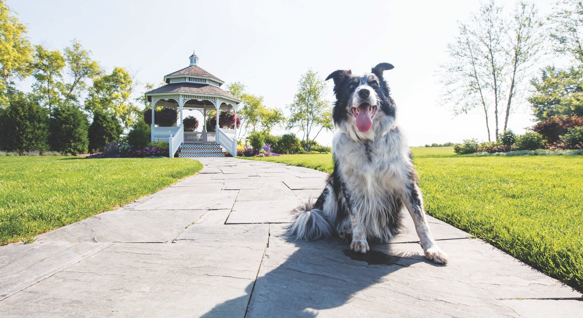 Dog-Friendly Mackinac Island