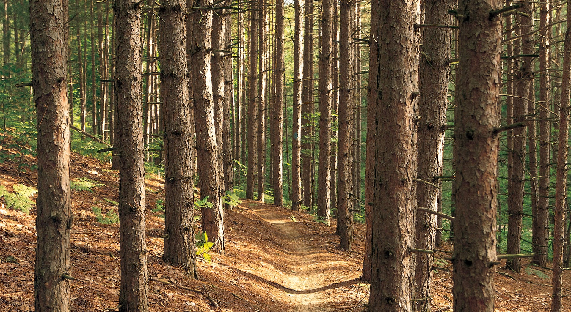 guided hikes michigan