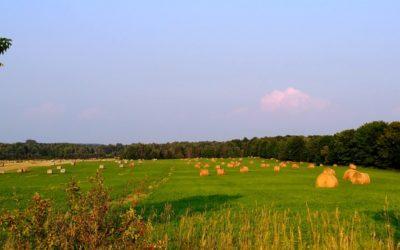 Oh, Beautiful Countryside