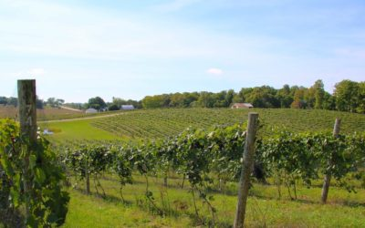 Petoskey Wine Country is Calling Us