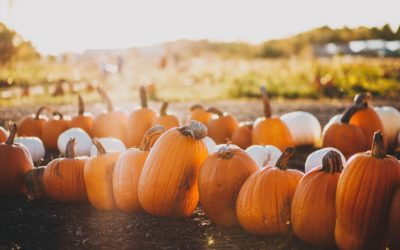 9 Best Northern Michigan Pumpkin Patches for a Fall Family Outing