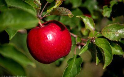 Happy Apple Days