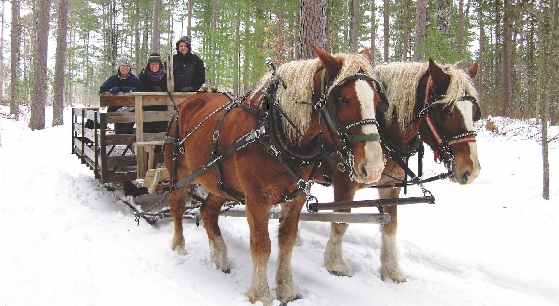 Beautiful Winter Sleigh Rides In Northern Michigan Mynorth Com