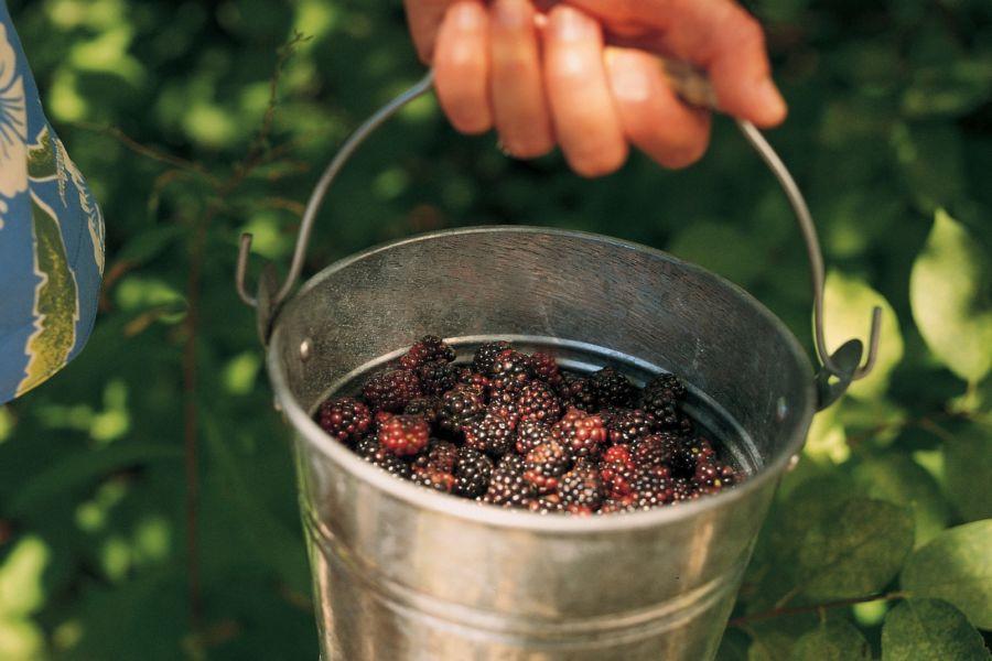 upick farm, small bucket of berries